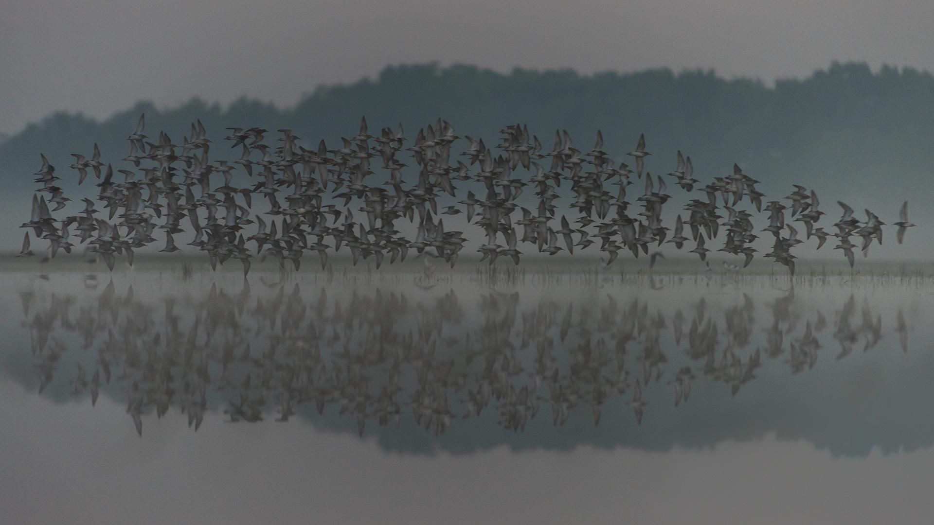20160430-043647-000-birds-ungern-d810